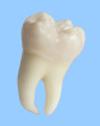 сохранение зуба мудрости